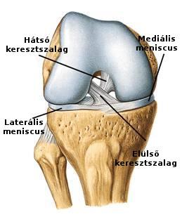 térdízületi kezelés medialis ligamentumának törése teraflex a térd artrózisáról